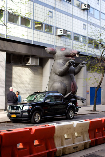 An inflatable rat outside Stella Tower