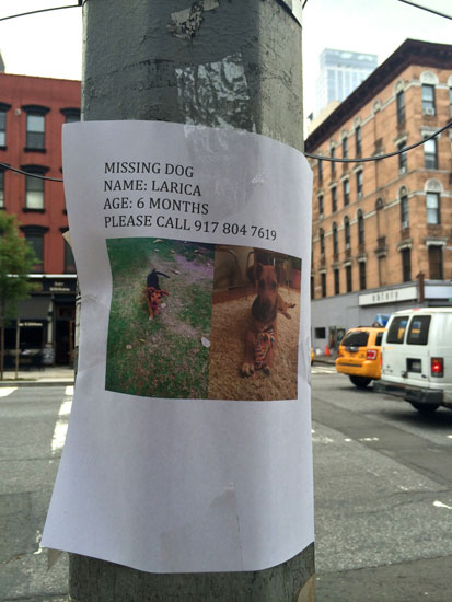 A flyer for a missing dog