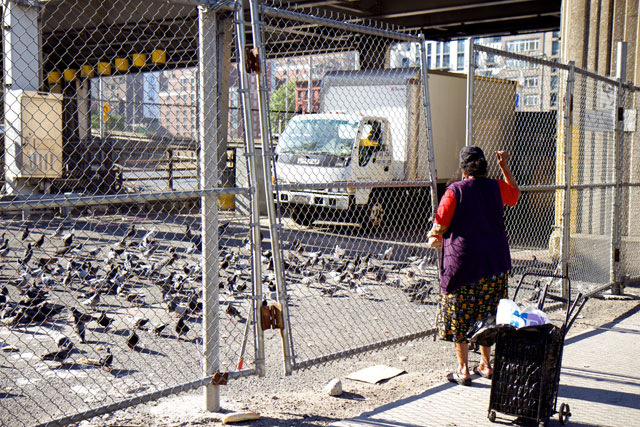 A woman feeding a flock of pigeons